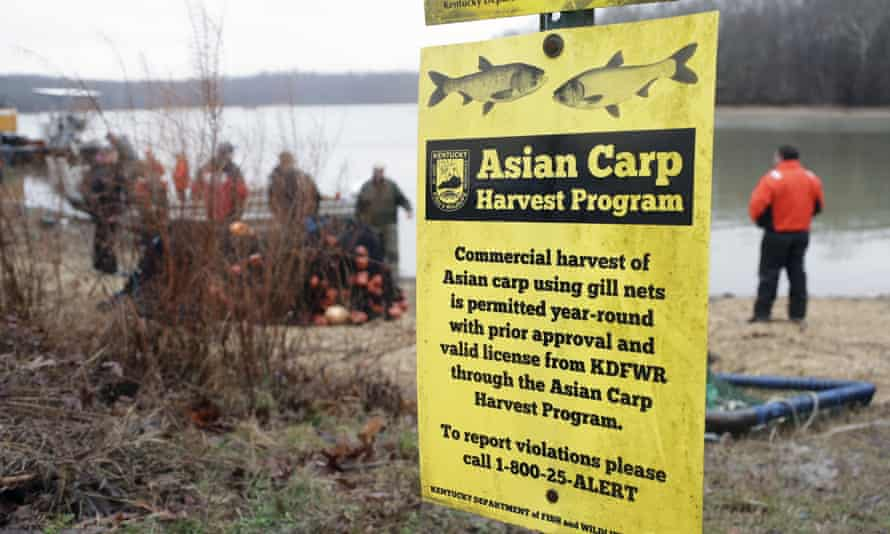 Wildlife officials take part in a roundup of Asian carp in Smith Bay on Kentucky Lake. The invasive species threatens to upend aquatic ecosystems along the Mississippi River and dozens of tributaries.
