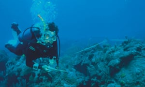 Callum Roberts counting fish off the Caribbean island of Saba in the 1990s.