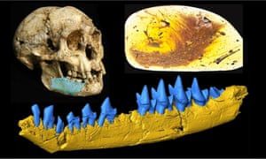 Lost Worlds Revisited's Top Fossils of 2016