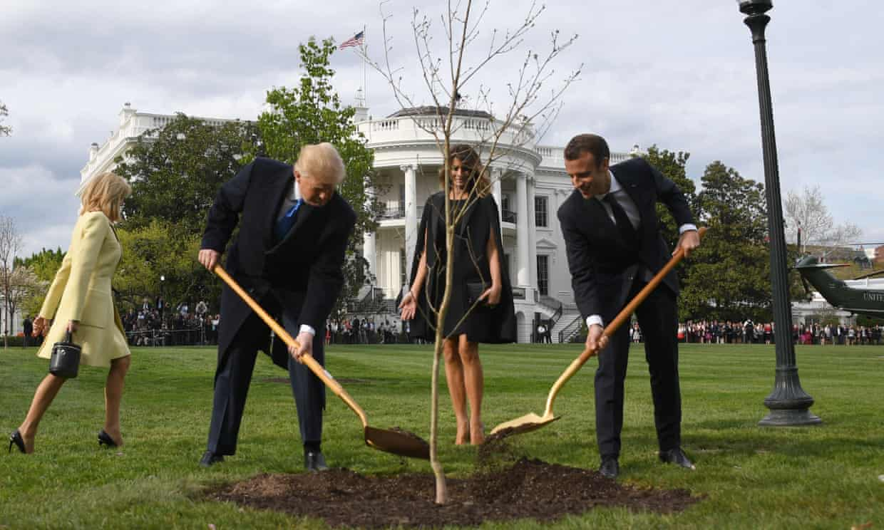 US-France friendship tree dies