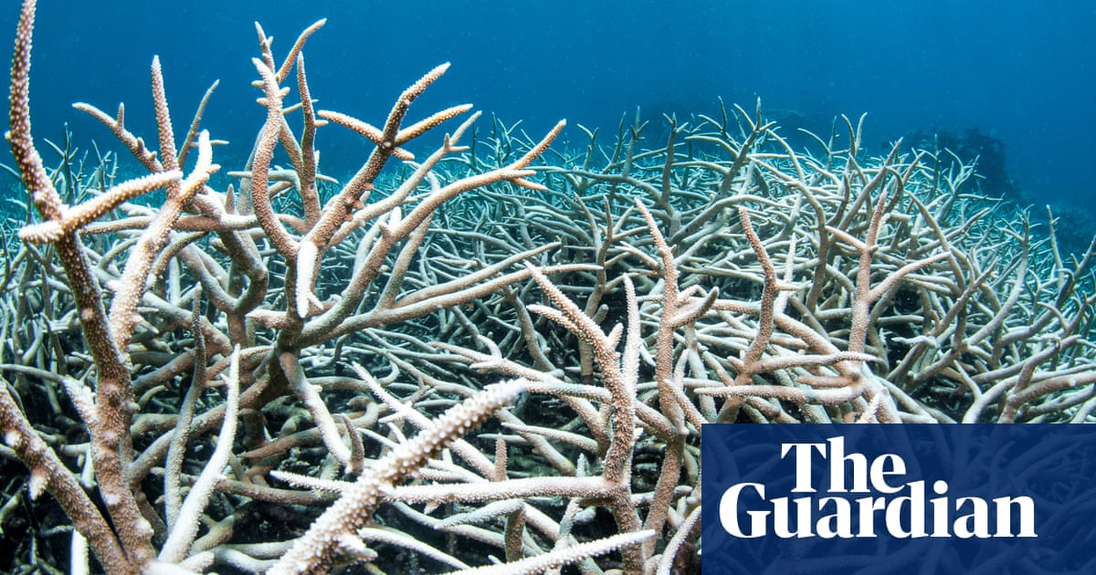 Morning mail: reef lobbying, Brisbane's Olympic fate, Bezos in space