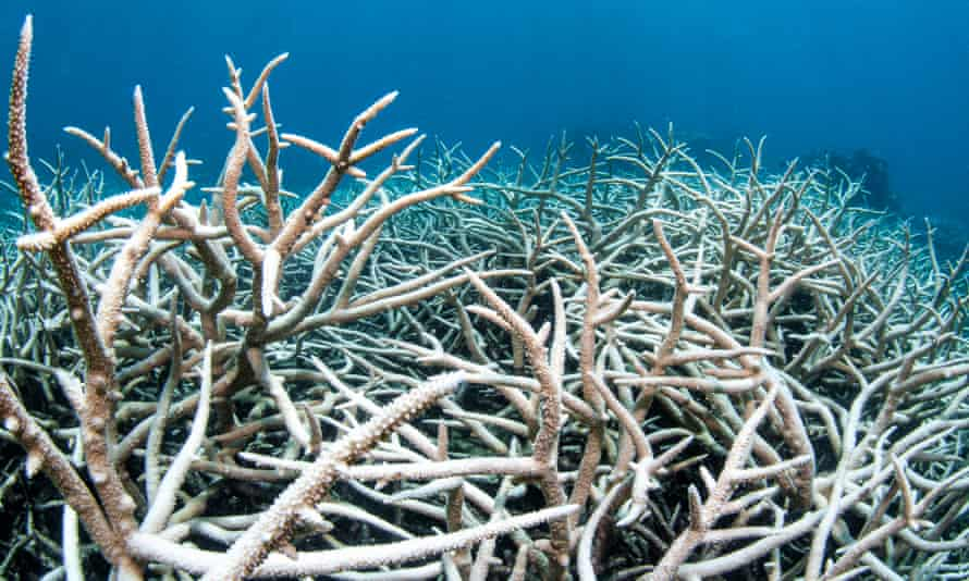 The Australian government has embarked on a lobbying campaign to avoid a Unesco 'in-danger' listing to the Great Barrier Reef world heritage site, which has experienced a number of mass coral bleaching events.