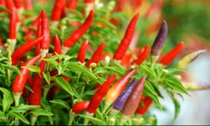 Gardens Grow Your Own Curry Life And Style The Guardian