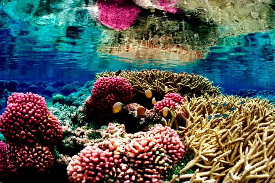 A coral reef ecosystem in the Pacific Remote Islands Marine National Monument, south of Hawaii.