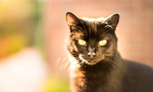 Investigators believe the cat killer could be responsible for up to 500 deaths.