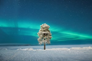 Aurorae category runner-up: Lone Tree under a Scandinavian Aurora by Tom Archer (UK)   The photographer decided to explore the area around the hotel on a very crisp -35C evening in Finnish Lapland. When he found this tree, he decided to wait for the misty conditions to change and could not believe his luck when the sky cleared and the aurora came out in the perfect spot. Archer spent about an hour photographing it before his camera started to lock up because of the harsh conditions, but by then he was happy to call it a night