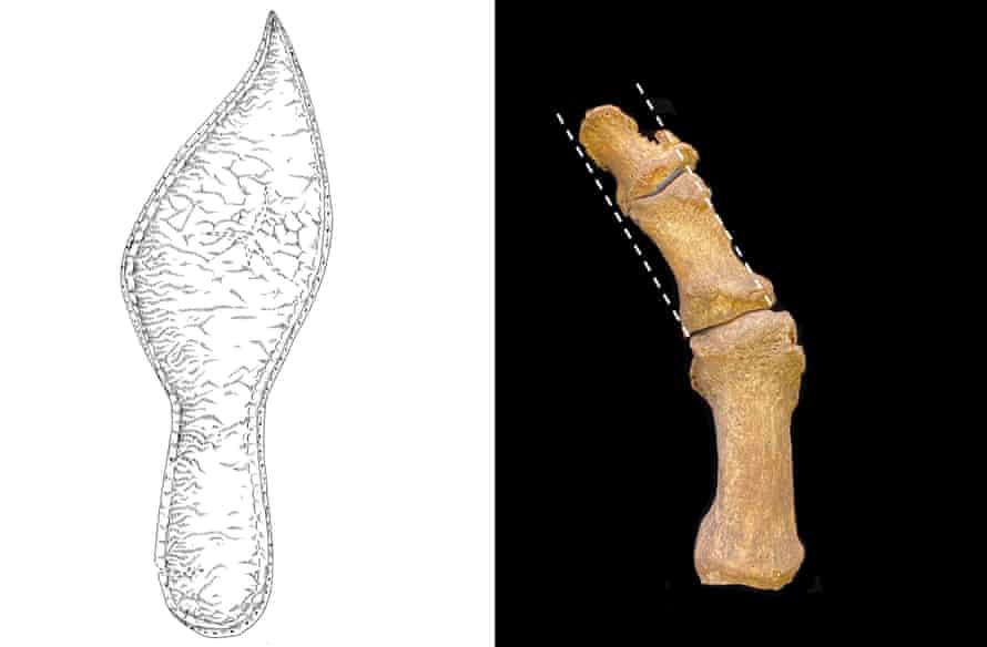Composite of shoe and foot bones