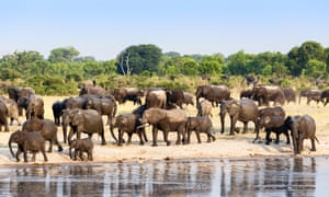 Namibia, South Africa and Zimbabwe, which host about a third of all remaining elephants, have stable or increasing populations.