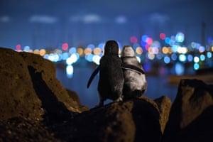 Ocean photography awards community choice winner: Flipper in Flipper by Tobias Baumgaertner