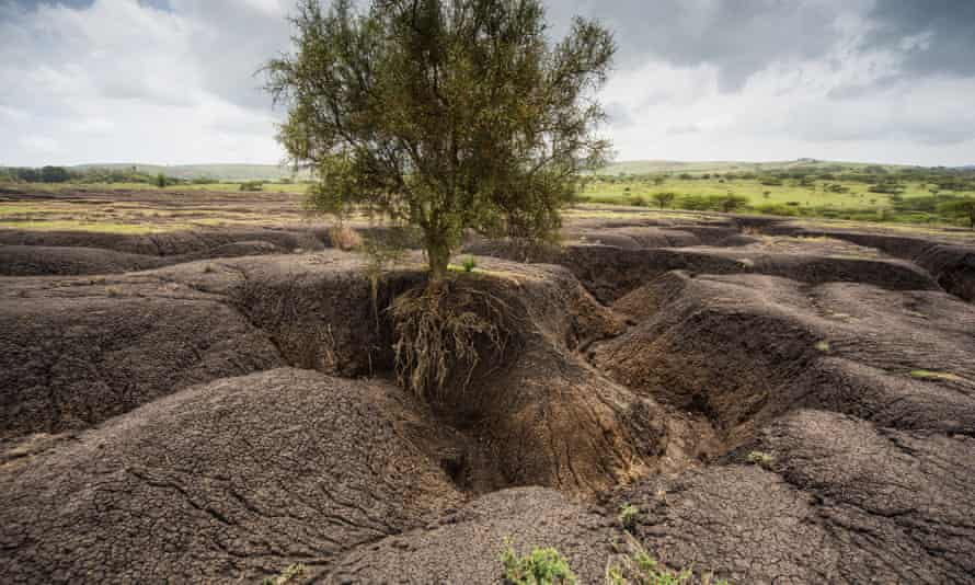 Soil erosion in Tanzania. Fertile soil is being lost around the world at a rate of 24bn tonnes a year.