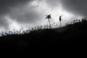 A ridgeline above Baie Barrier, east Pentecost