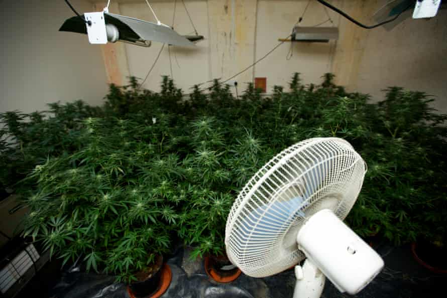 A cannabis farm discovered in a house in Oldham in 2013.