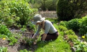 Woman weeding in sunny garden