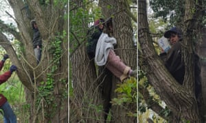 Activists in trees
