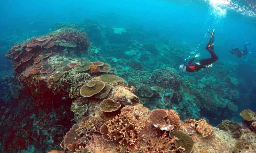 The Great Barrier Reef in Queensland.