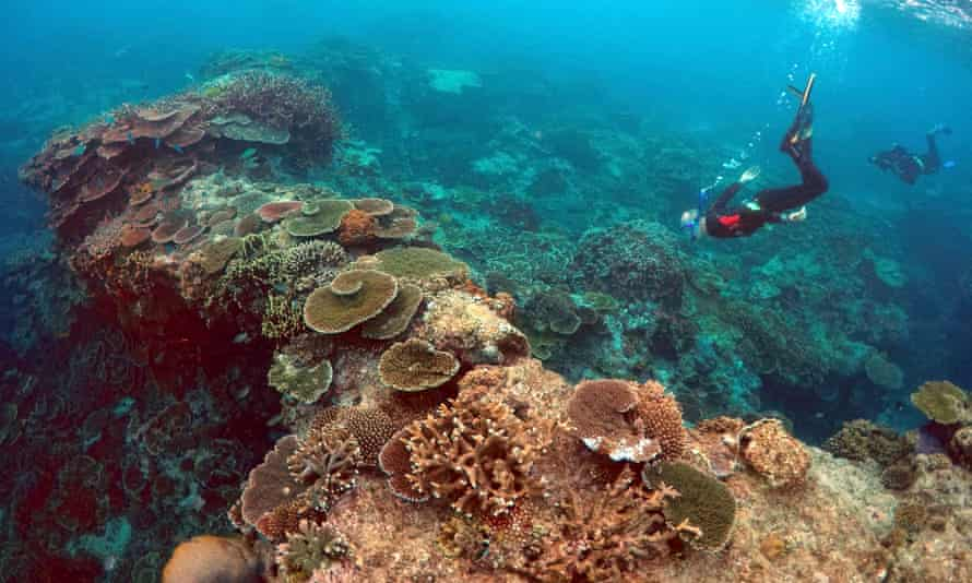 Snorkelers examining the Great Barrier Reef