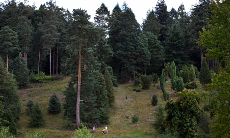 Trees in Bedgebury Pinetum, close to the Kent/East Sussex border