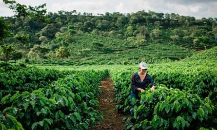 Coffee farm in Costa Rica