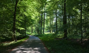The Sonian Forest, Foret de Soignes, or Zonienwoud, 11,000 hectare woodland to the southeast of Brussels. Image shot 2013.
