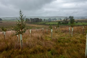 More than 150,000 native trees have been planted in the fells as part of an agreement between Natural England, Ravenstonedale Common Graziers Association and the Woodland Trust.