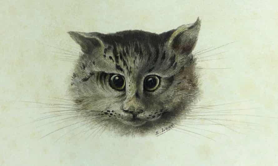Fine drawing of a head of a cat against a pale green background