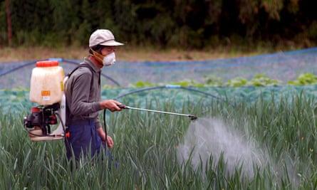 Man spraying pesticides on rice paddyfield