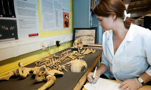 Osteologist from Mola Headland studies a skeleton excavated ahead of the HS2 construction.