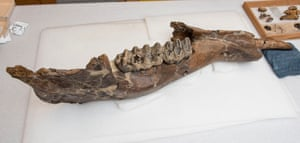 The excavated jaw.
