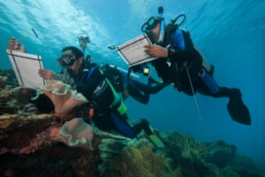 Divers from the Nature Conservancy monitoring coral reefs in ocean waters off Kofiau island, part of the Raja Ampat Islands of Indonesia, in the Coral Triangle