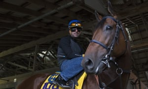 American Pharoah  pauses in front of photographers  in the stables at Keeneland following his arrival for the 2015 Breeders' Cup