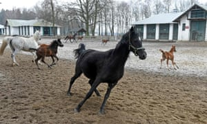 Purge at Poland's renowned stud farms pits politicians against rich