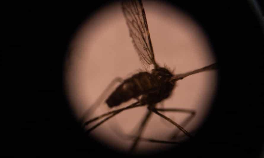 The Pacific is at risk of an acute spike in malaria cases and deaths 'if the wheels come off control measures' due to the Covid-19 pandemic, health experts say.