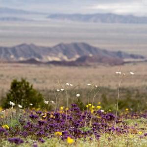 Longshot of Death valley