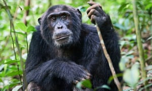 HIV spread from chimpanzees and gorillas that were slaughtered for bushmeat in west Africa.