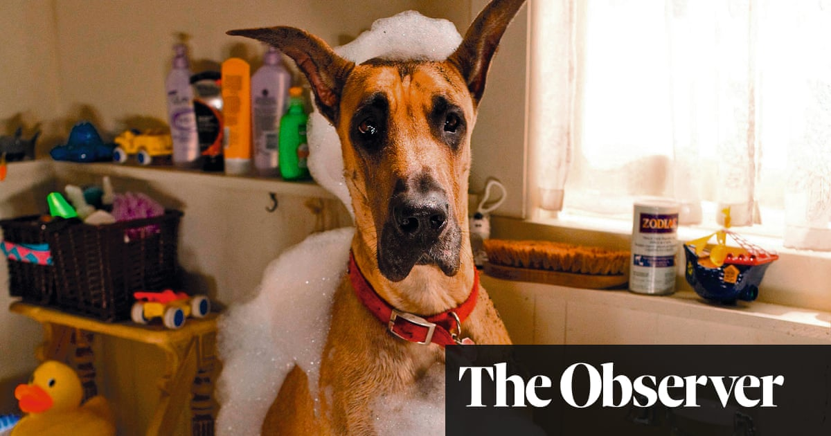 Hollywood hounds: canine film stars – in pictures