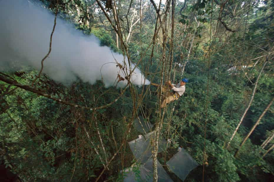 Smithsonian researcher and entomologist Terry Erwin fogs trees with insecticide to collect insects from a lowland rainforest canopy in Peru.