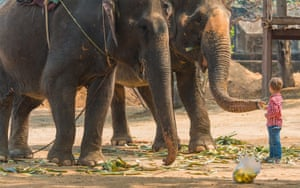 A young boy stands in front of two elephants, feeding them bananas, at the Sanctuary of Truth, Thailand