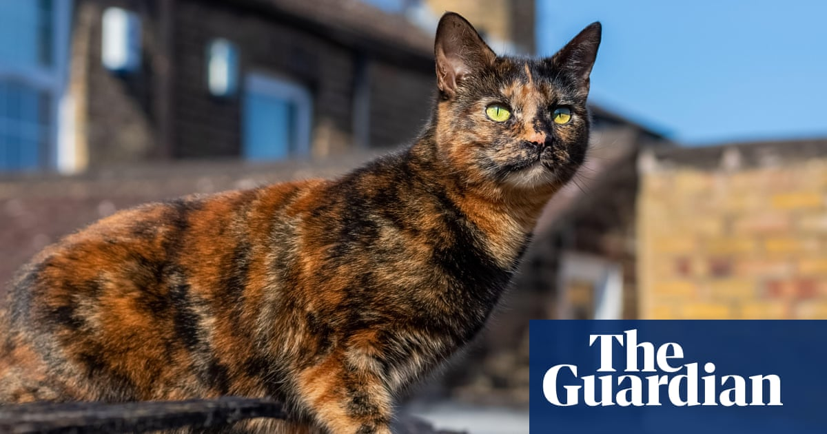 Cat owners: have you experienced issues with pet illness related to cat food?