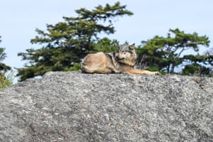 Takaya lying on a rock