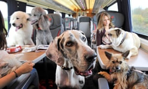 Dogs are allowed on trains … but not on seats