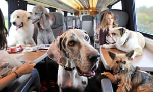 Dogs | Lifeandstyle | The Guardian