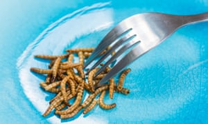 Mealworms on a plate with a fork