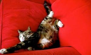 Deep sleep and yoga stretching