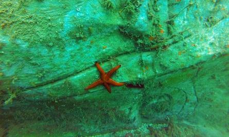 starfish on a sculpture
