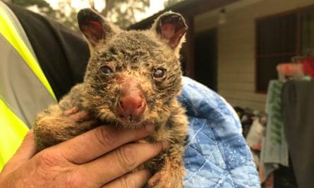 Burnt possum