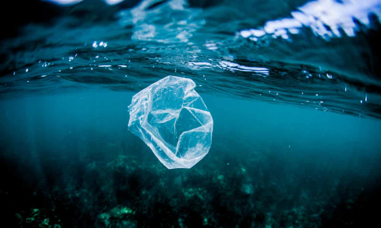 A plastic bag floats over a reef in the ocean