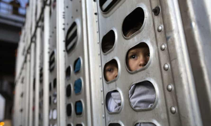 Central American migrant girls get a ride in a chicken truck, in Irapuato, Mexico, on Monday.