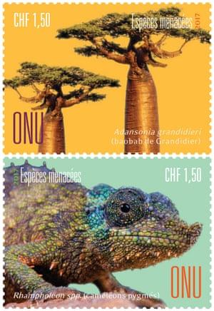 Grandidier's baobab and Pygmy chameleons