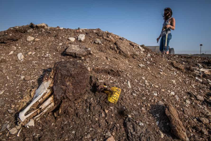 A quarantine dump site in Israel
