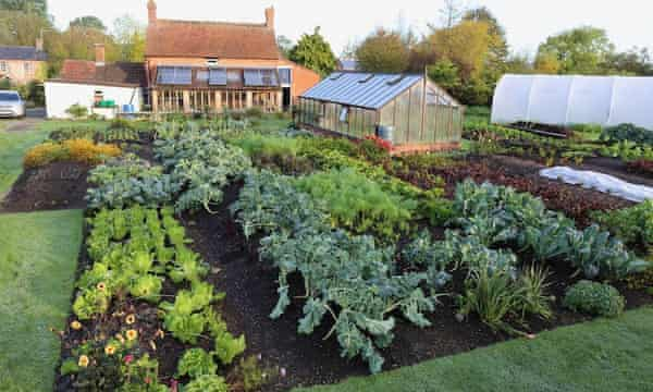Homeacres no dig garden 29th October. No compost or feeds have been applied for 10 months, showing how nutrients are available all the time without using fertilisers.